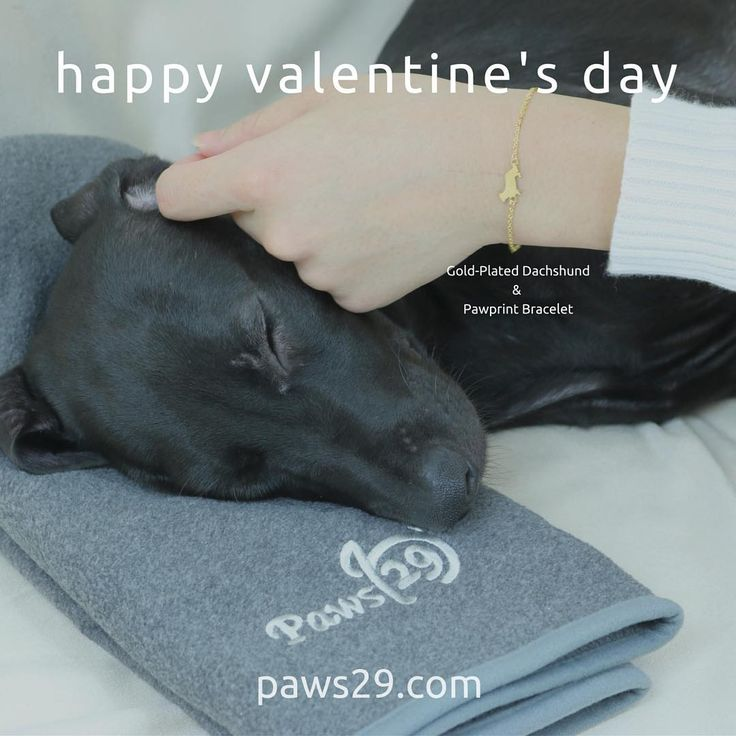 We have Happy Valentine's Day sale until 15th Feb 2016! Just visit paws29.com and get 20%off on all the products:) 2月15日迄バレンタインセールを行っています!全商品20%OFF!宜しくお願いします^_^      http://paws29.com/collections/animal-themed-accessories/products/gold-dachshund-pawprint-bracelet#