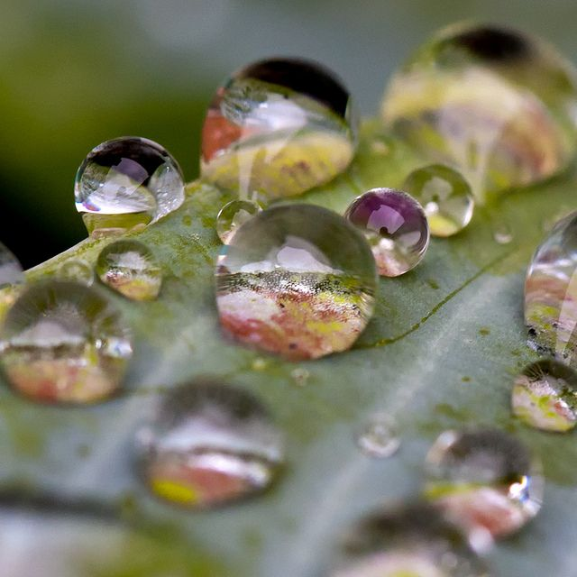 art idea~oil painted leaf and background then in the water droplets have different retro captured photos
