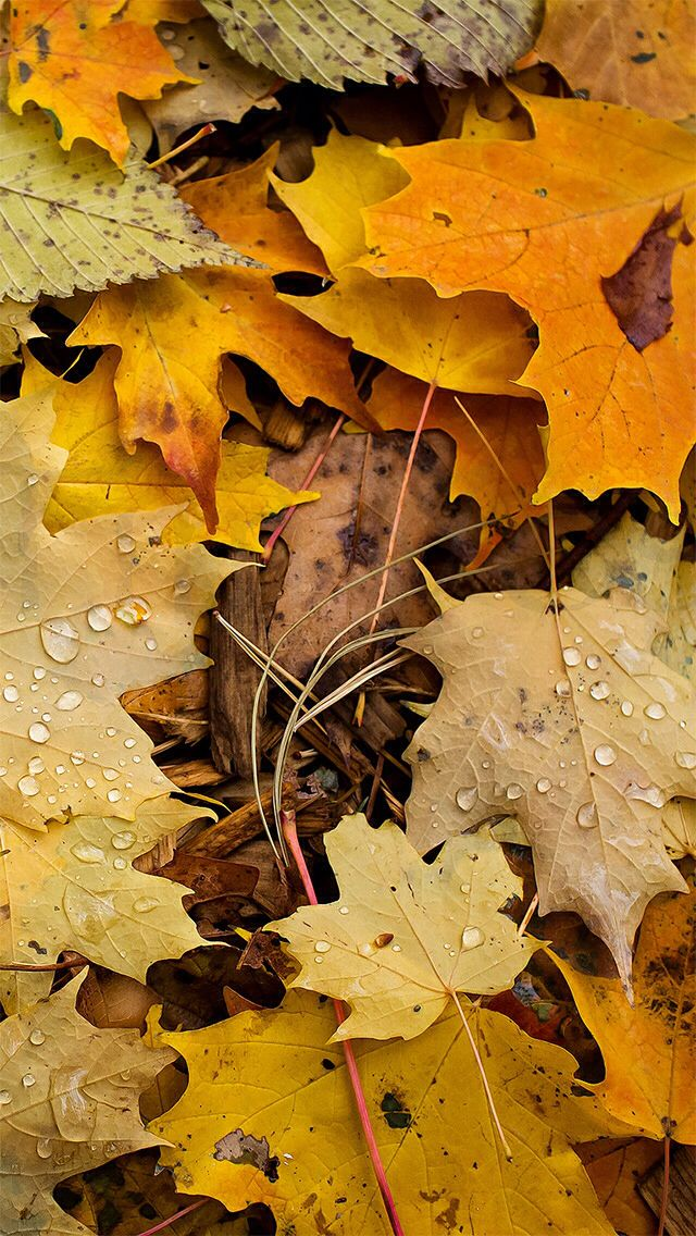 fall iphone wallpaper 2620 best iphone walls 1 images on 2789