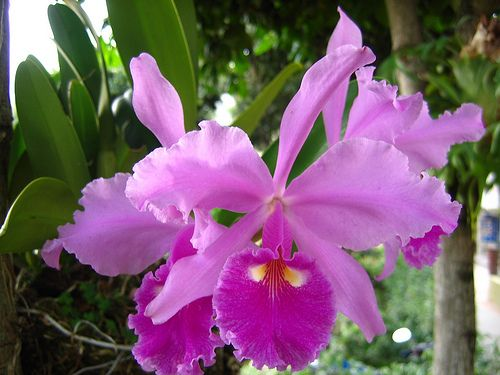 COLOMBIAN FLOWERS by castillomagallanes, via Flickr