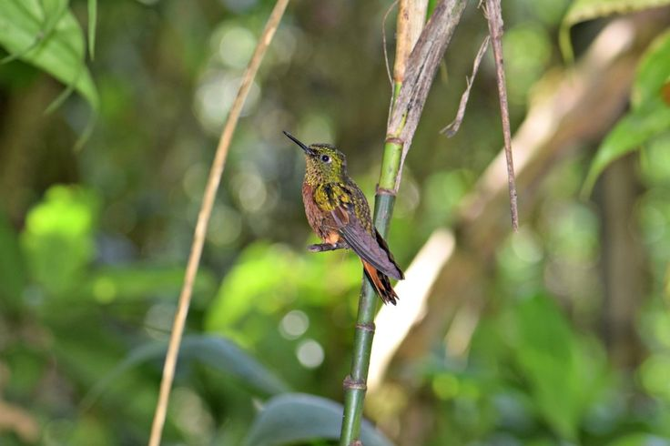A hummingbird at the Inkaterra Machu Picchu Pueblo hotel - a great place to stay with kids!