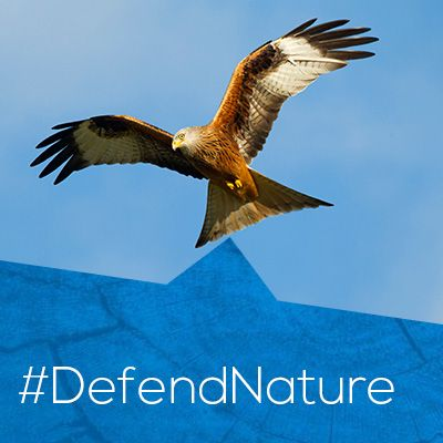 The laws that protect nature are currently under threat. Act now & ‪#‎defendnature‬