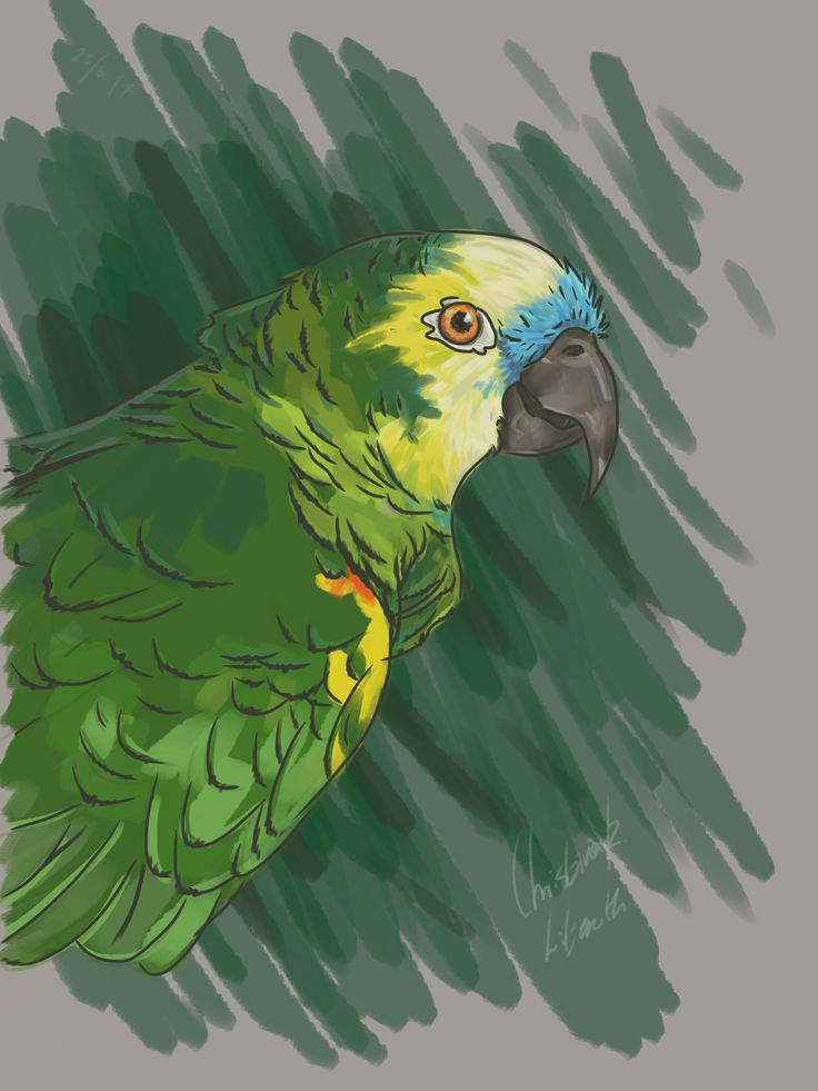 Blue fronted amazone; drawings by ArtWolf