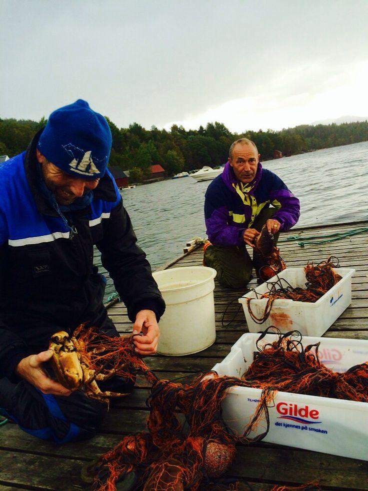Fishing crab in the fjord in #skodje #norway