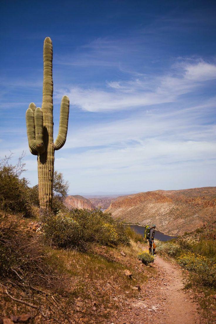 Saguara Cactus in the Superstition Mountains - 30ft cati!  / blog.jchongstudio.com