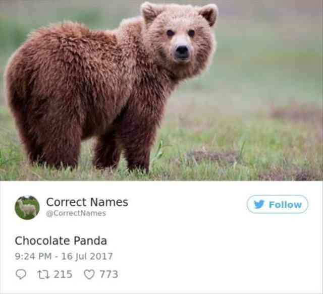 20 Correct Names Twitter Has Funny New Titles For Items Funny