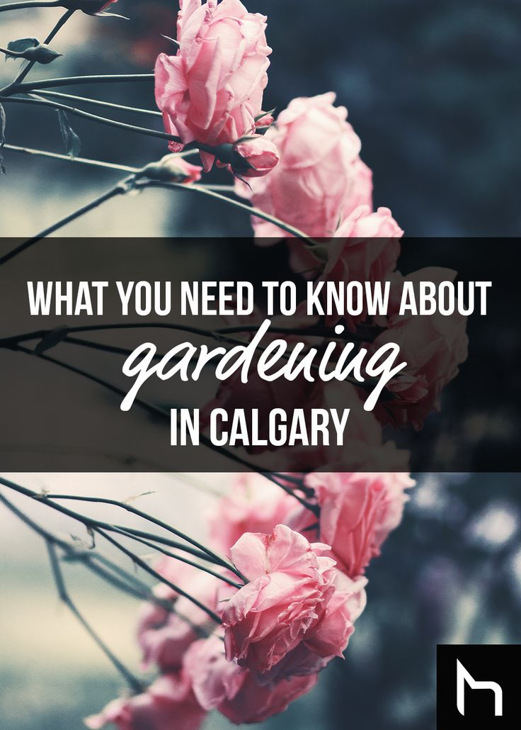 Everything you need to know about gardening in Caglary - Daily Hive