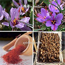 how to make saffron spice from plant