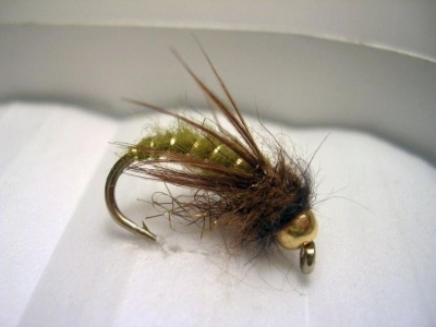 17 Best images about Caddis nymph, larva, pupa fly ...