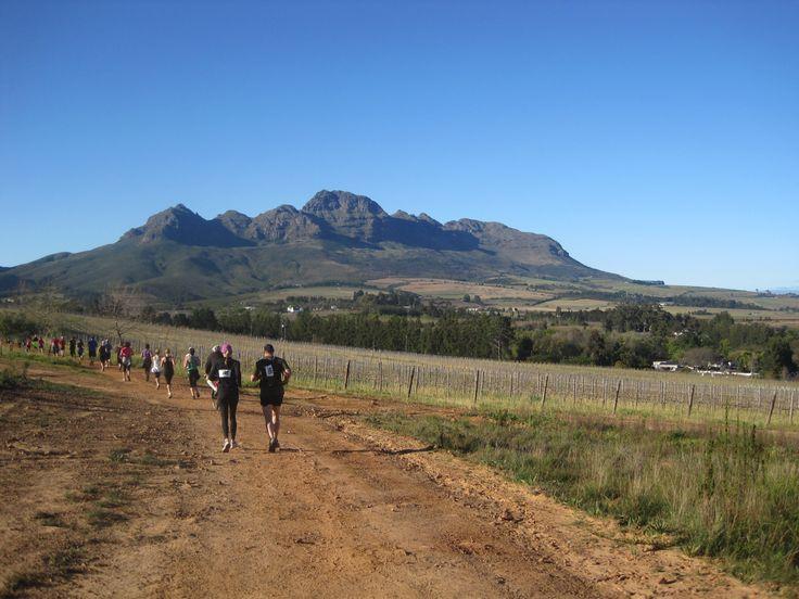 Cellar2Cellar Trail run Stellenbosch #Winelands
