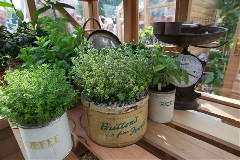 Att odla kryddväxter för dofternas skull är ett skäl, att odla dem för smakens ett annat. Ett kryddland kan se ut på många sätt följ våra tips för att enkelt få ditt eget kryddland!