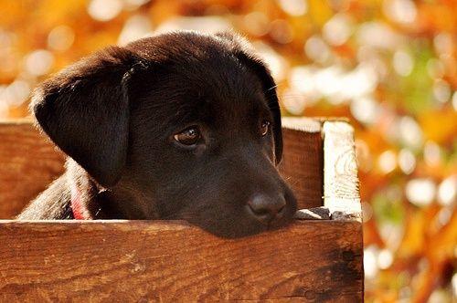 Notre chien de la semaine. Il est un peu découragé du retour du gel.     http://www.lubexpress.ca/lave-chien/
