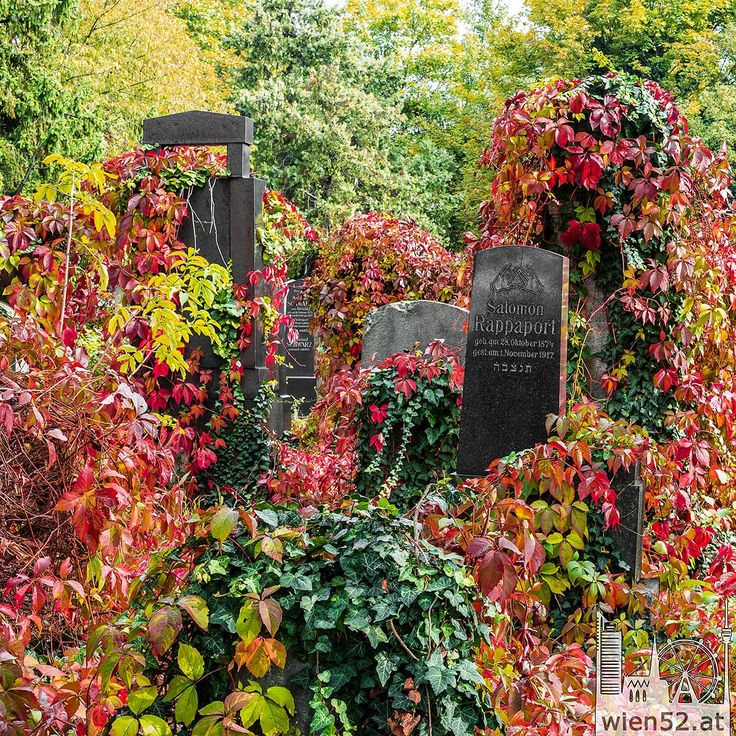 Herbst @Wiener Zentralfriedhof - 2015 Woche 42; Wien52, Fotos und Panoramen der Wiener Sehenswürdigkeiten die weltweit begeistern.