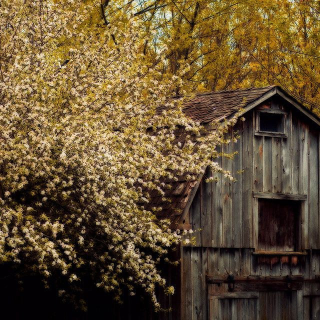 1000+ Images About Fall On The Farm On Pinterest
