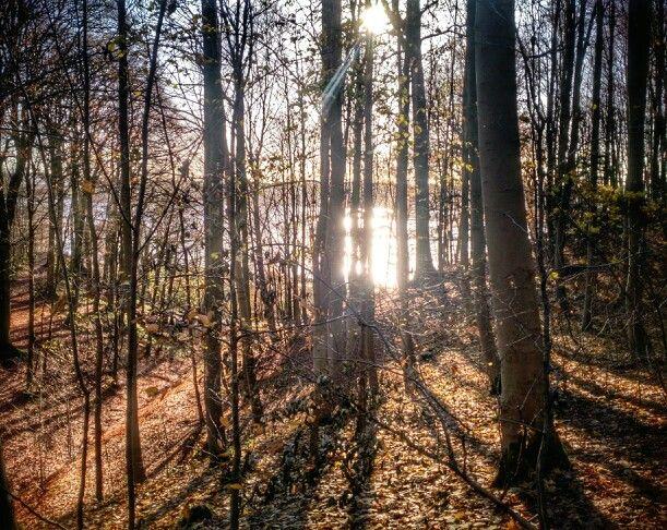 #Nørreskoven #Vejle #November