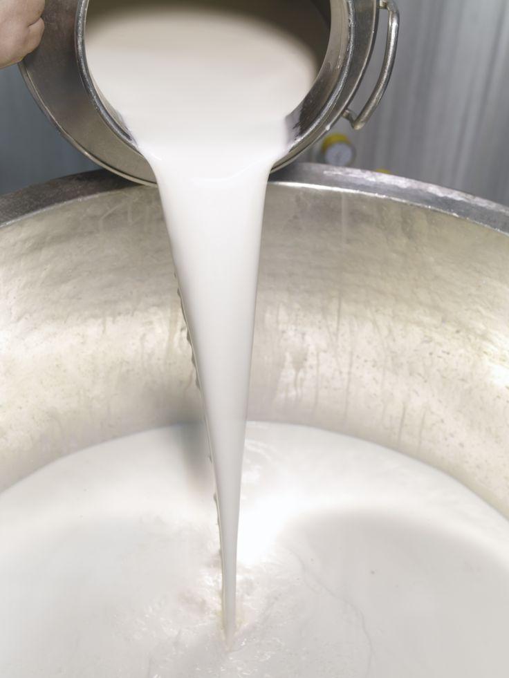 %100 manda sütü