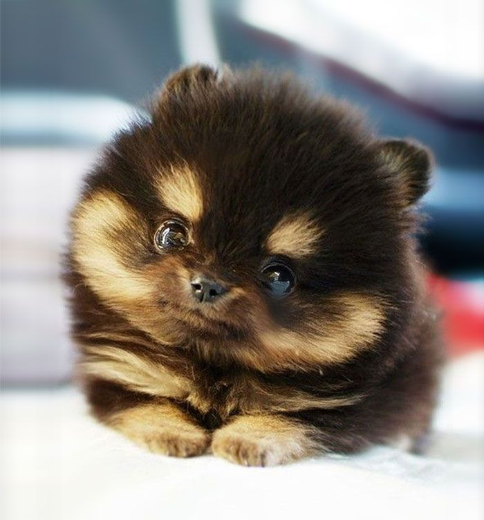 The Cutest Puppy In The World