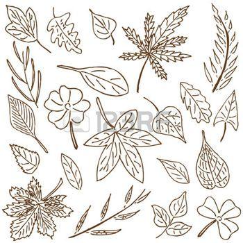 hojas de otoño dibujo: Dibujado a mano recogida dibujo de las hojas y plantas. Vectores