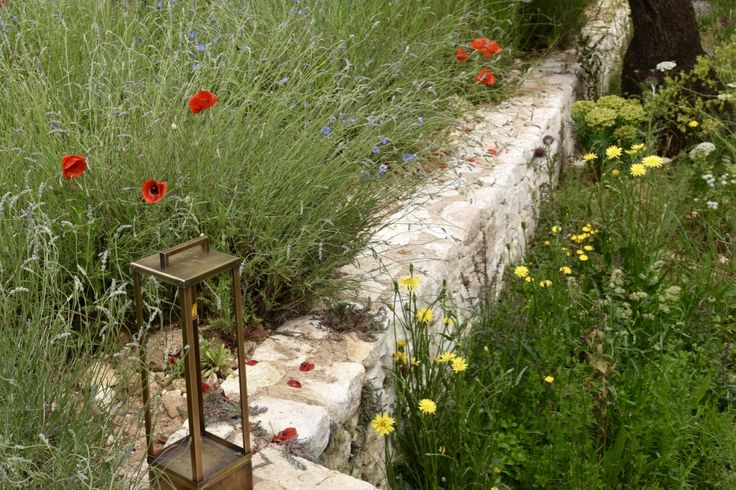 Poppies and lantern in the L'Occitane garden at Chelsea Flower Show 2016