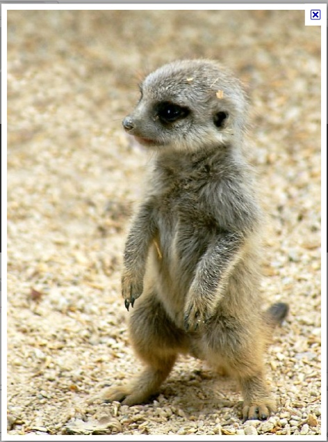 South african baby animals - photo#8