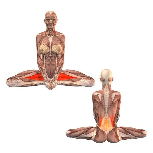Bound angle pose - Baddha Konasana - Yoga Poses   YOGA.com