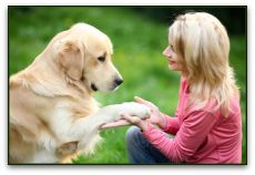 Ten Service Dog Tricks To Teach Your Dog