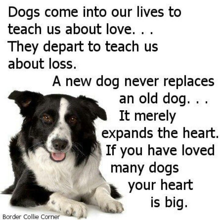 things dogs teach about life love