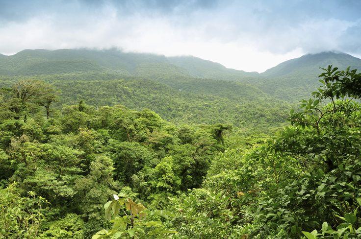 In una foresta pluviale tropicale si trova la più grande varietà di piante e animali esistente in natura. Più del 70% di tutte le specie animali e vegetali presenti sulla Terra vive nelle foreste tropicali.