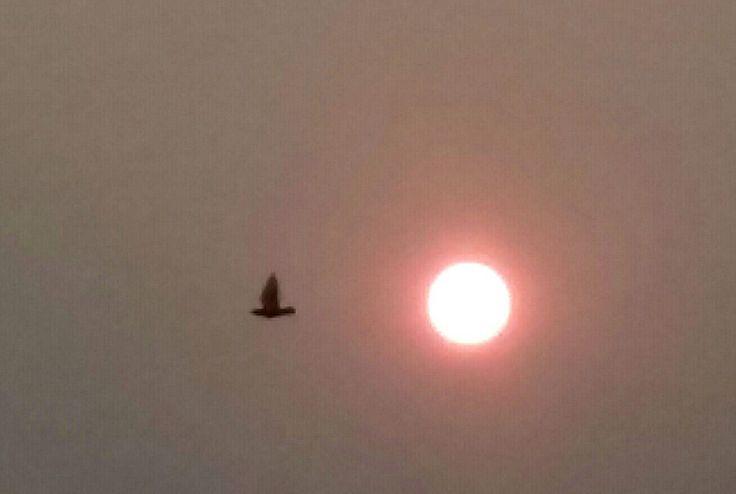 Flight to sun