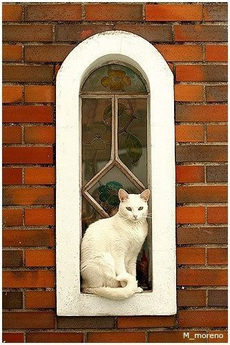 white cat sitting in a white window frame