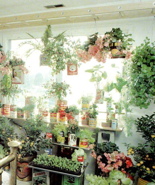 indoor garden. Yes.  Sunroom garden using soup cans etc. Grown from seeds.