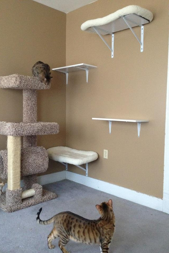 homemade cat playground pets pinterest cat