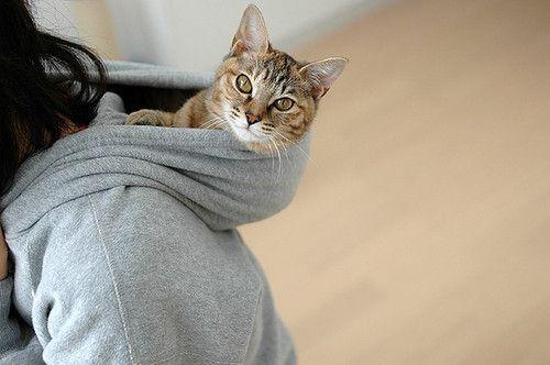 cats in her hood