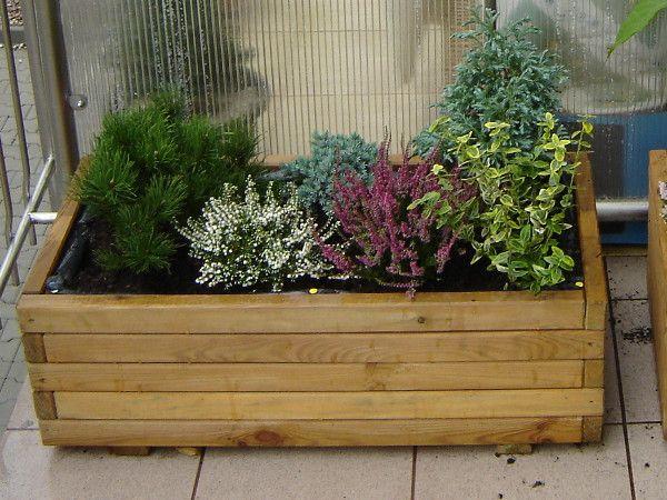 Rośliny balkonowe zimą