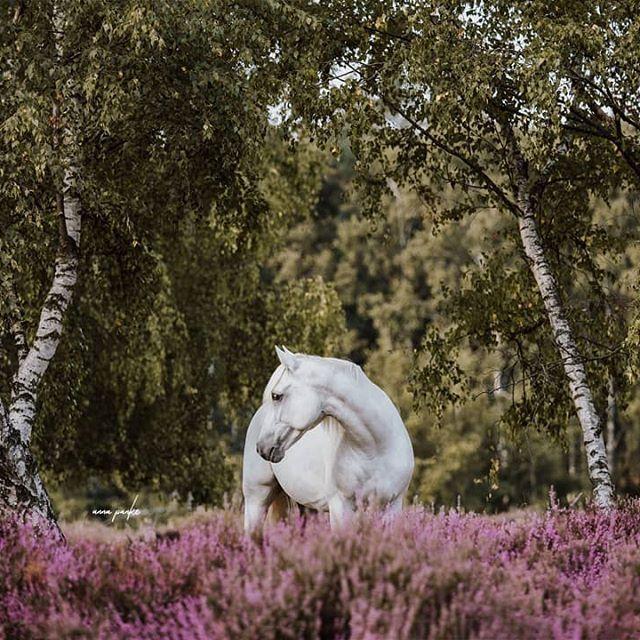 Bild könnte enthalten: Baum, Pflanze, Blume, im Freien und Natur #Regram via @www.instagram.com/p/BtI5MeDhMJJ/