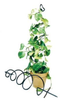 50 House Plants that Purify Your Home or Office: Achla Spiral Pot Trellis.  Definitely getting my hands on one of those Trailing Stem or make one!