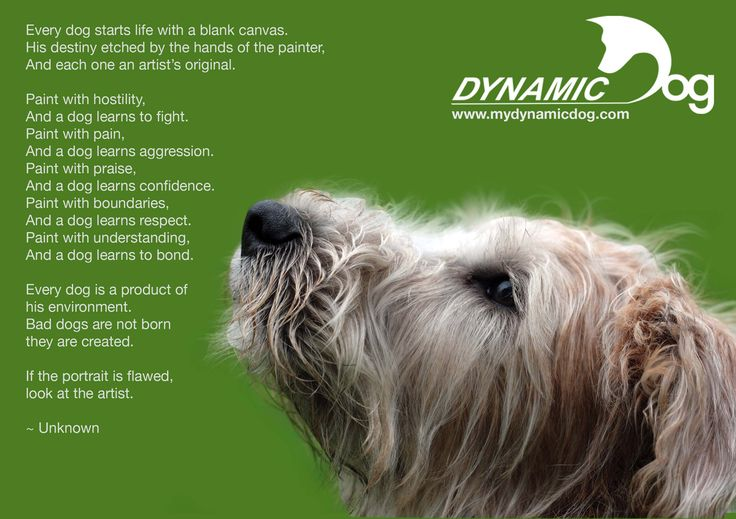 This is what the Dynamic Dog respect-based method is all about! Praise, boundaries and understanding.