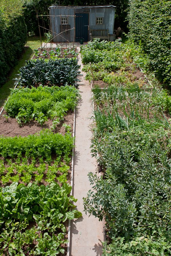 An absolutely perfect kitchen garden...If I has a space like this...this would be my garden.!!