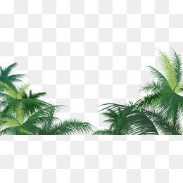 O coco Verde, folhas, Gráfico De Vetor De árvore De Coco, O Coco Verde, FolhasPNG e Vector
