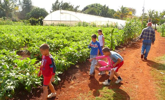 Cuba Organica  Cuban schoolchildren visit a local farm.