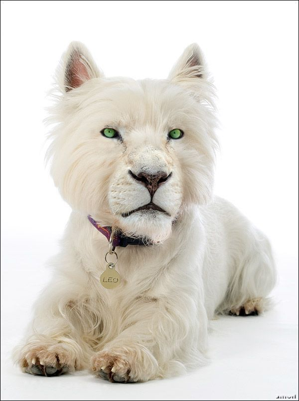 Crazy Photoshop makings, Amazing animals, White Tiger dog