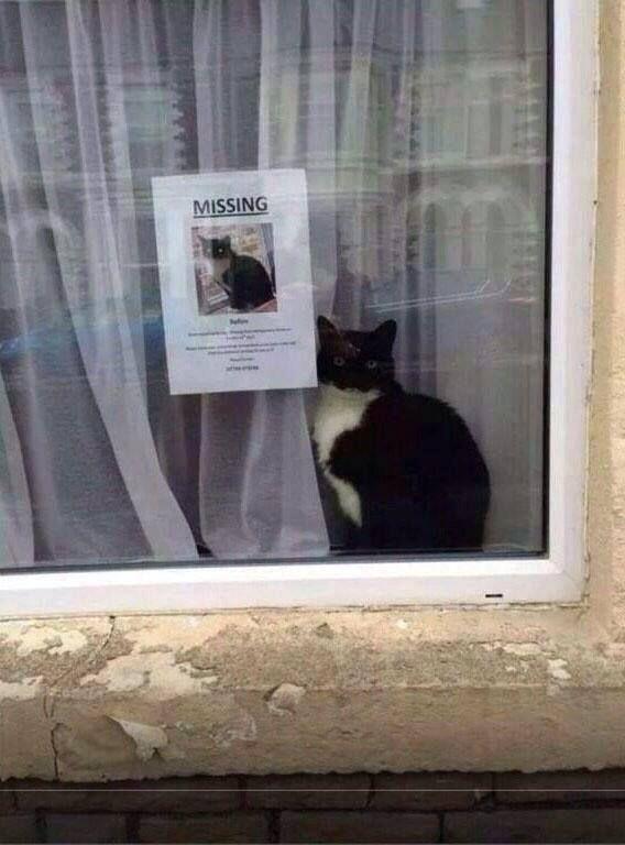 On a retrouvé le Chat de Schrödinger