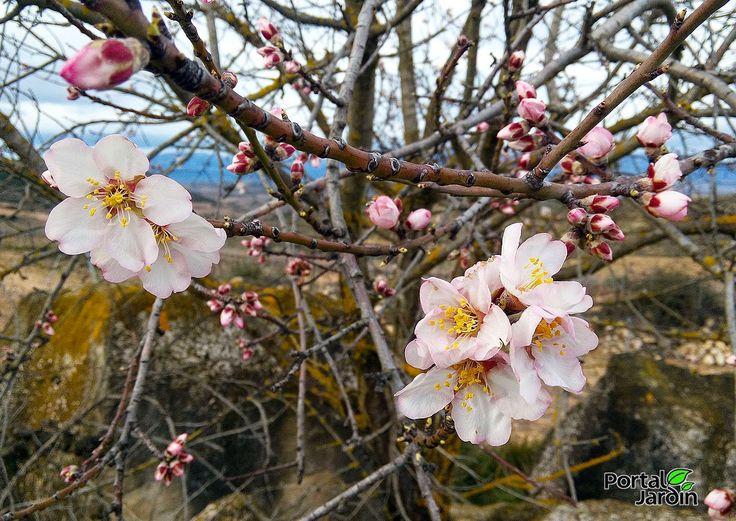 Portal Jardín: El huerto y el jardín en marzo