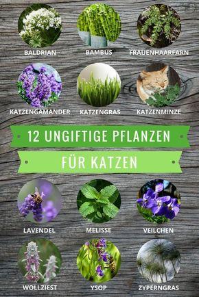 Plantas não tóxicas para gatos: essas espécies podem até ser comidas   – hund und Katze