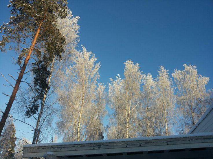 Lumisia puita