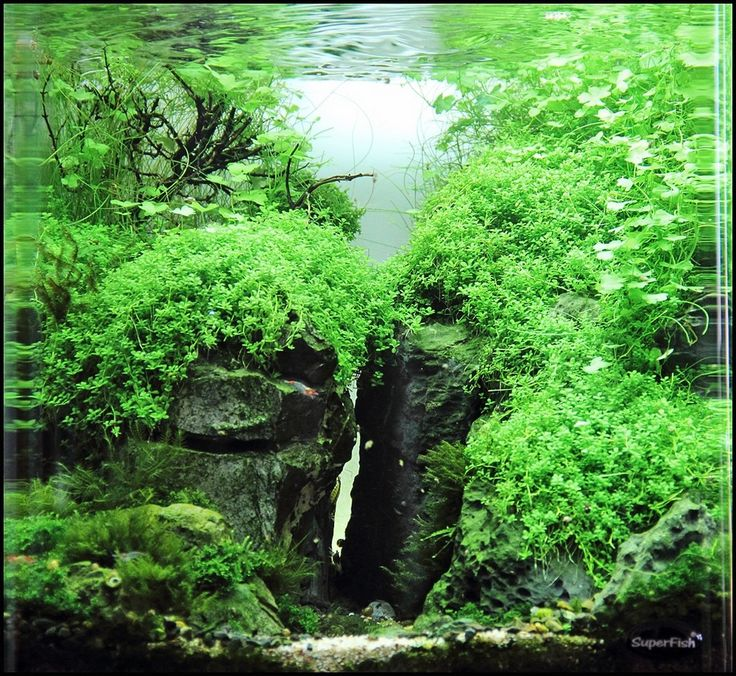 751 best images about Aquascaping on Pinterest | Tropical ...