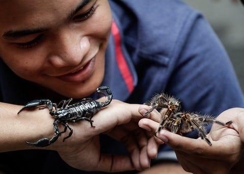 Macoy Valdez näitab oma lemmikloomi, pikakarvalist skorpioni ja tarantula pärast lemmikloomade massilist õnnistust Manila kirikus