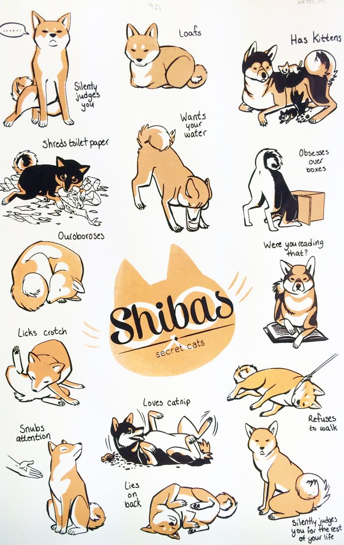 Shibas Like Cats