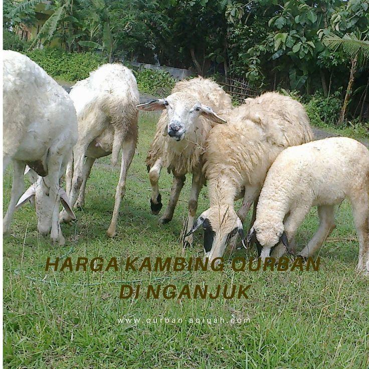 Harga Kambing Kurban di Nganjuk / 085853444472