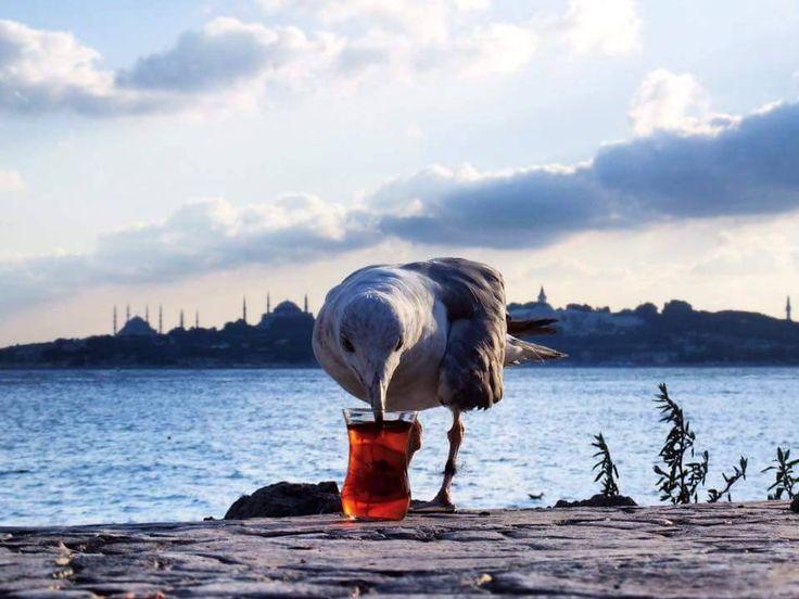 Çayını içer Martı #türkiye